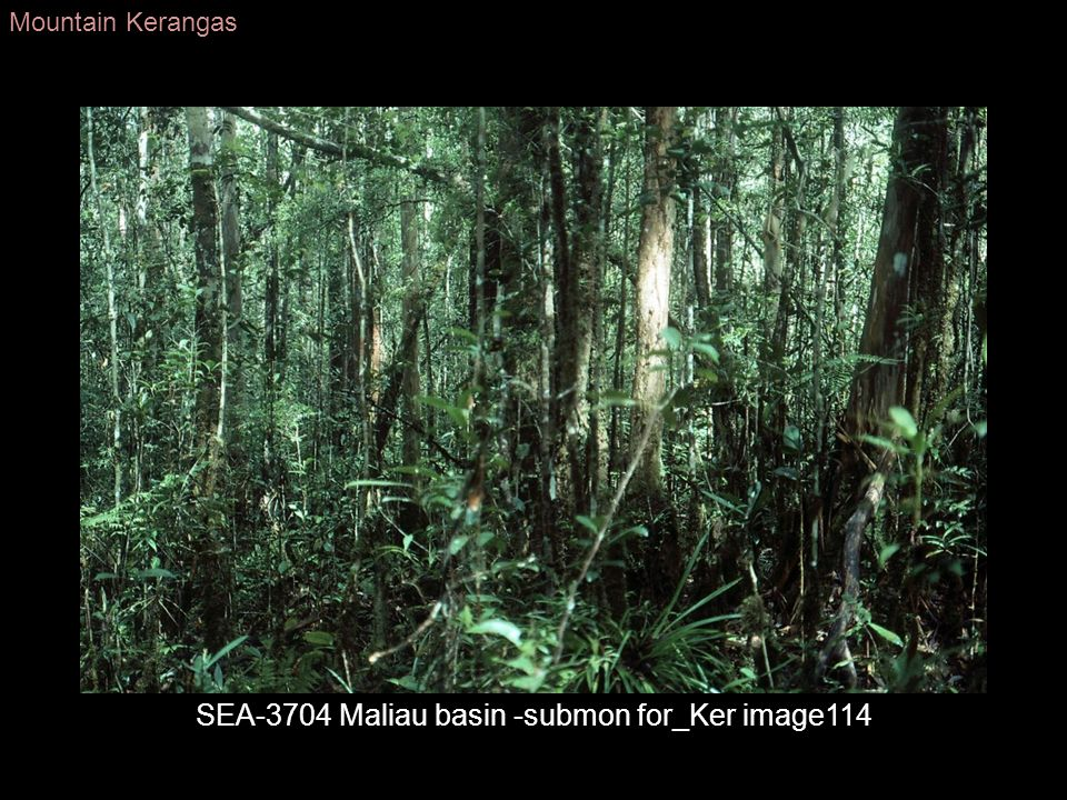 SEA-3704 Maliau basin -submon for_Ker image114