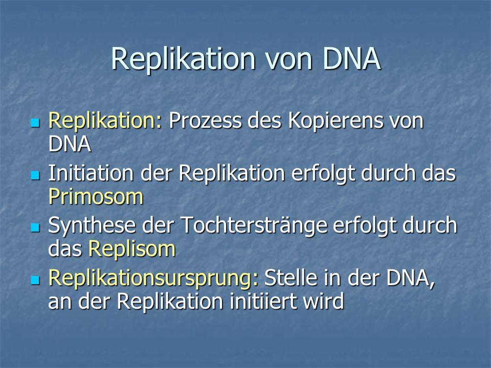 Replikation von DNA Replikation: Prozess des Kopierens von DNA