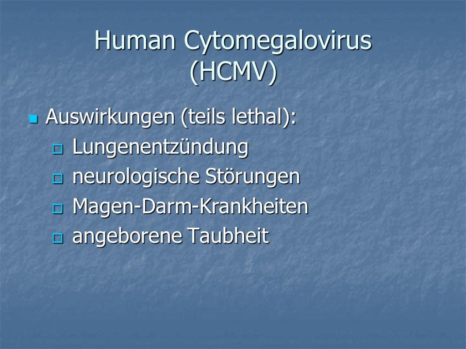 Human Cytomegalovirus (HCMV)