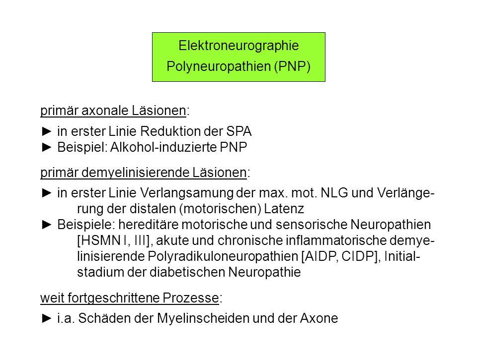 Polyneuropathien (PNP)