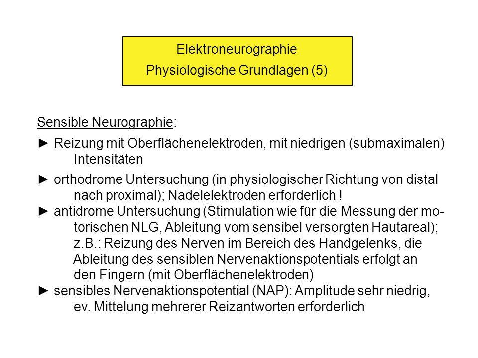 Physiologische Grundlagen (5)