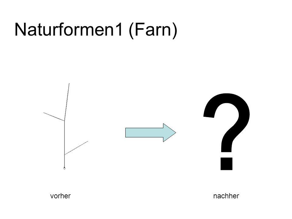 Naturformen1 (Farn) vorher nachher