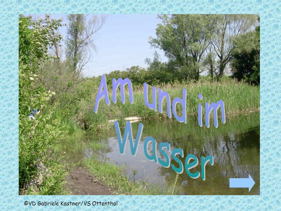 Am und im Wasser ©VD Gabriele Kastner/VS Ottenthal