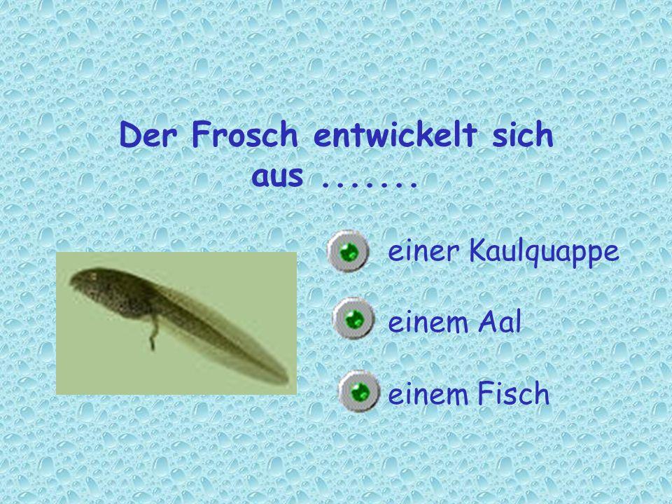 Der Frosch entwickelt sich