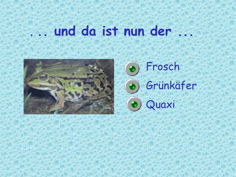 . .. und da ist nun der ... Frosch Grünkäfer Quaxi