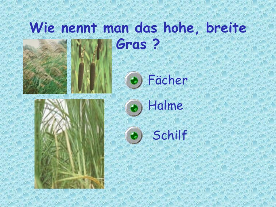 Wie nennt man das hohe, breite Gras
