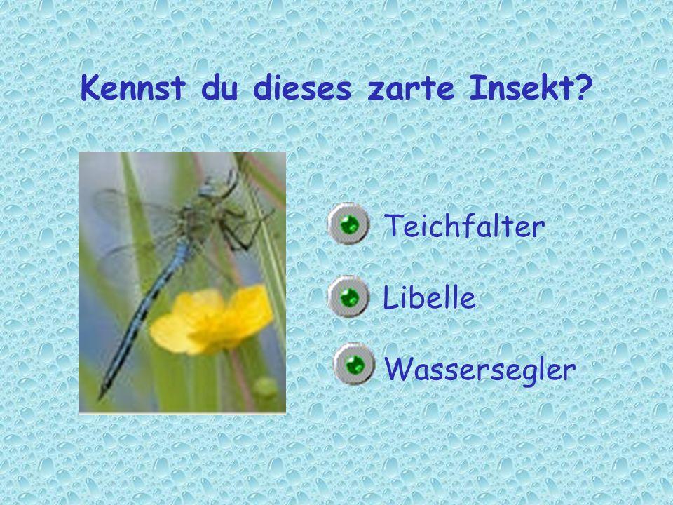 Kennst du dieses zarte Insekt