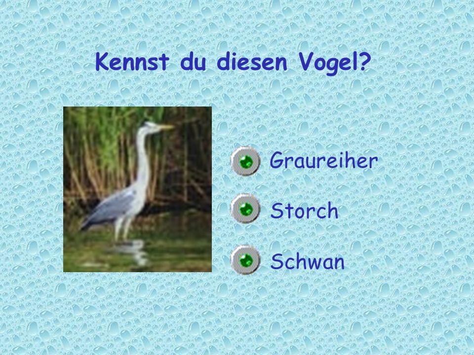 Kennst du diesen Vogel Graureiher Storch Schwan