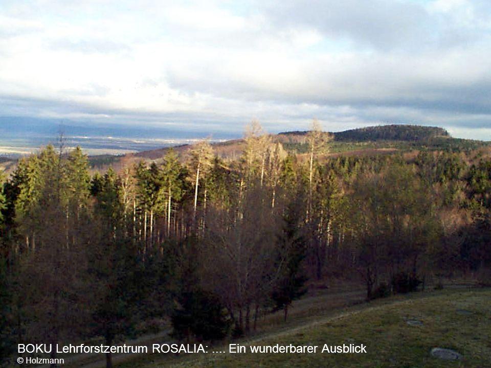 BOKU Lehrforstzentrum ROSALIA: .... Ein wunderbarer Ausblick © Holzmann