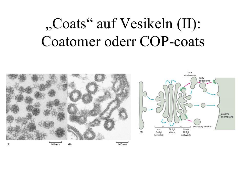 """Coats auf Vesikeln (II): Coatomer oderr COP-coats"
