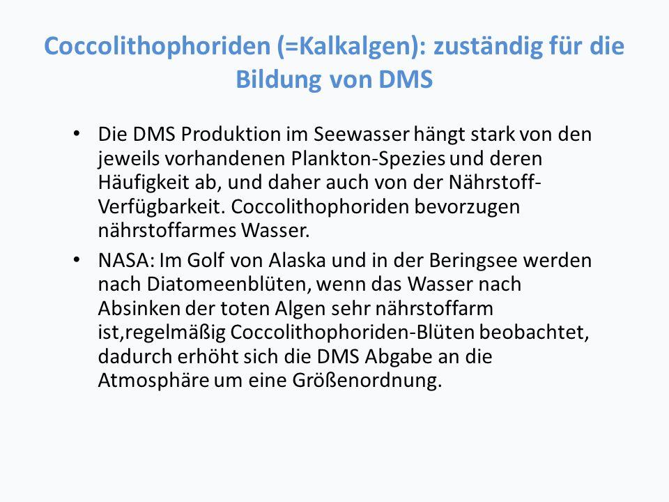 Coccolithophoriden (=Kalkalgen): zuständig für die Bildung von DMS
