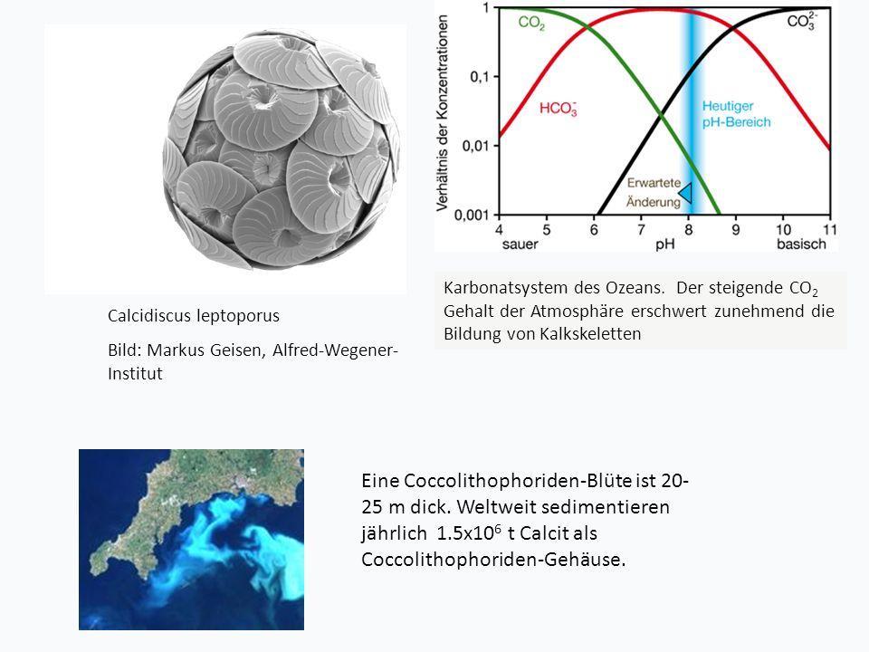 Karbonatsystem des Ozeans
