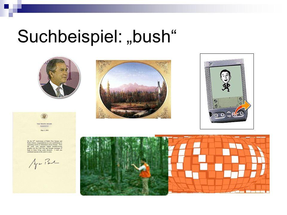 """Suchbeispiel: """"bush"""