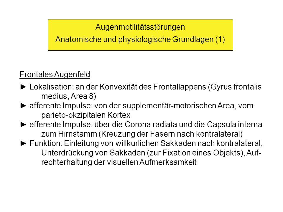 Augenmotilitätsstörungen Anatomische und physiologische Grundlagen (1)