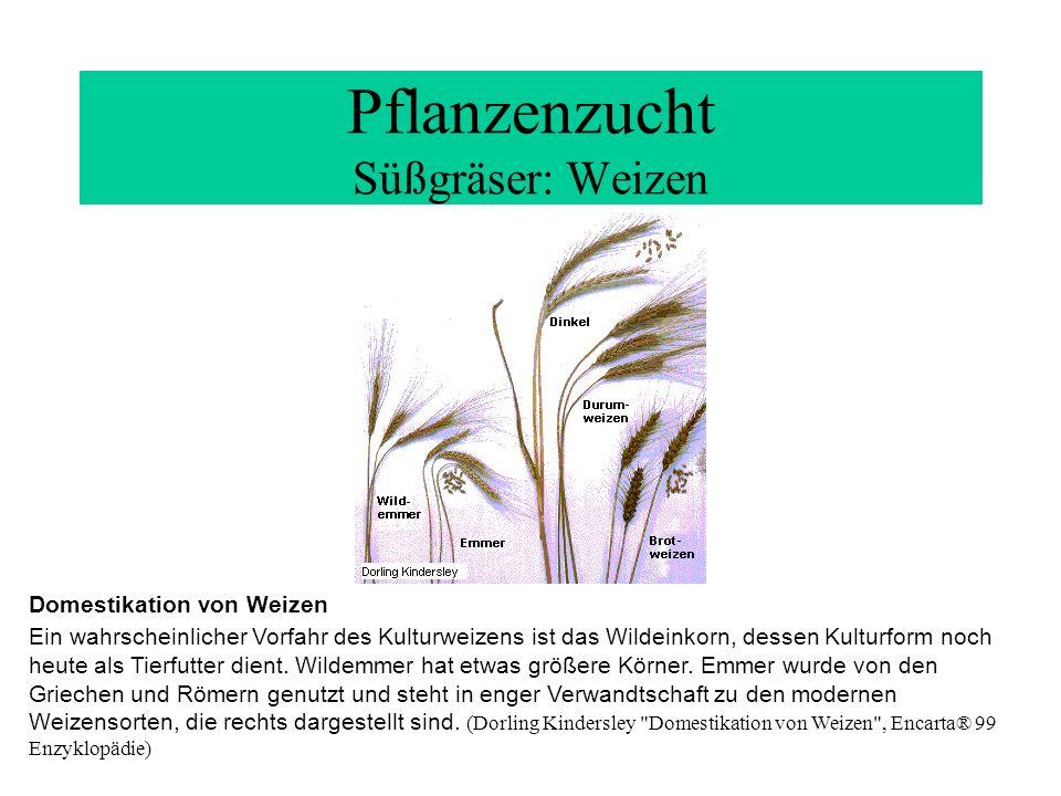 Pflanzenzucht Süßgräser: Weizen