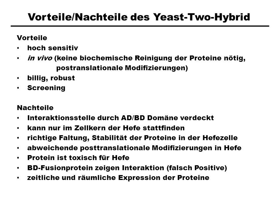 Vorteile/Nachteile des Yeast-Two-Hybrid