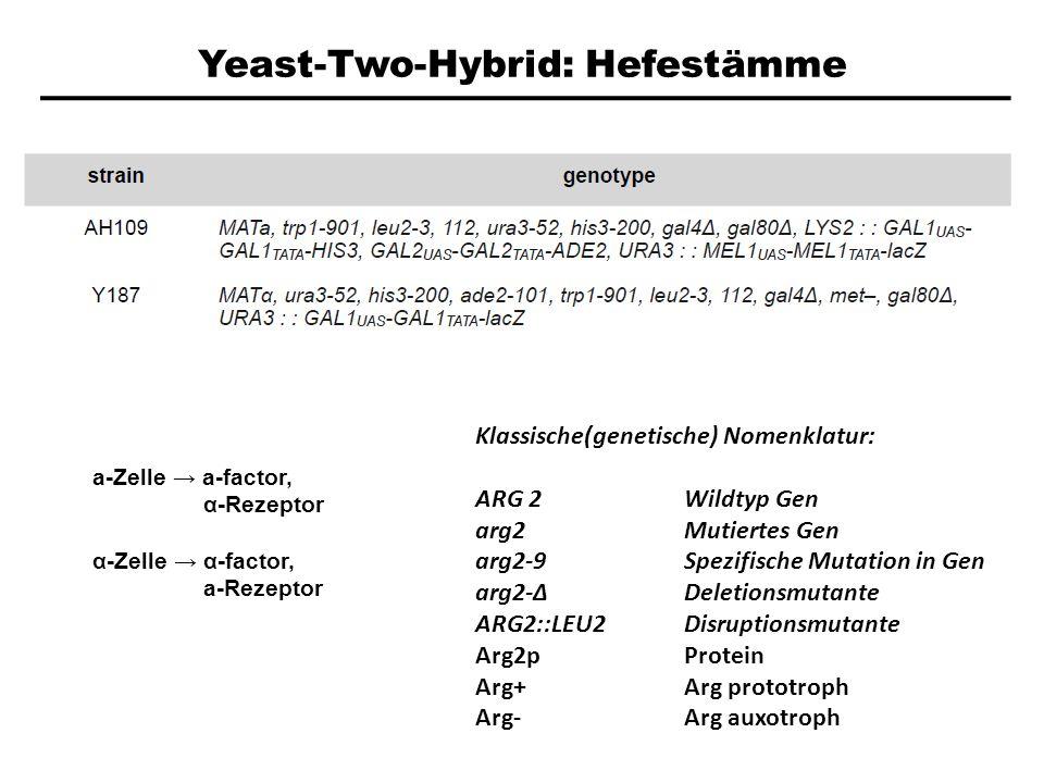 Yeast-Two-Hybrid: Hefestämme