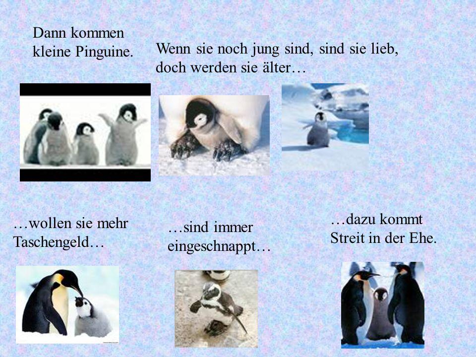 Dann kommen kleine Pinguine.