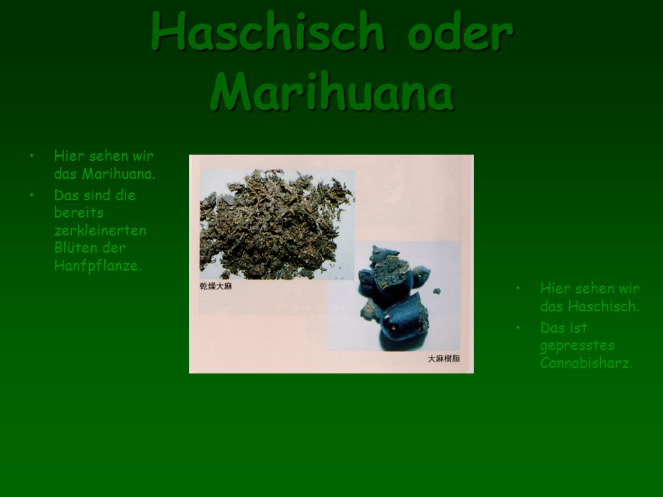 Haschisch oder Marihuana