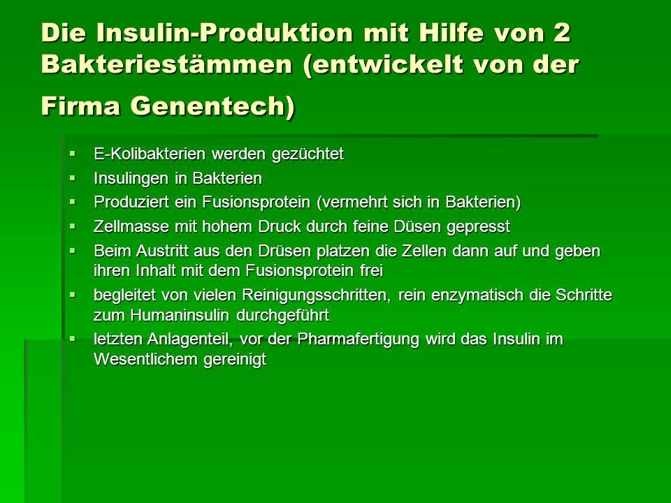 Die Insulin-Produktion mit Hilfe von 2 Bakteriestämmen (entwickelt von der Firma Genentech)