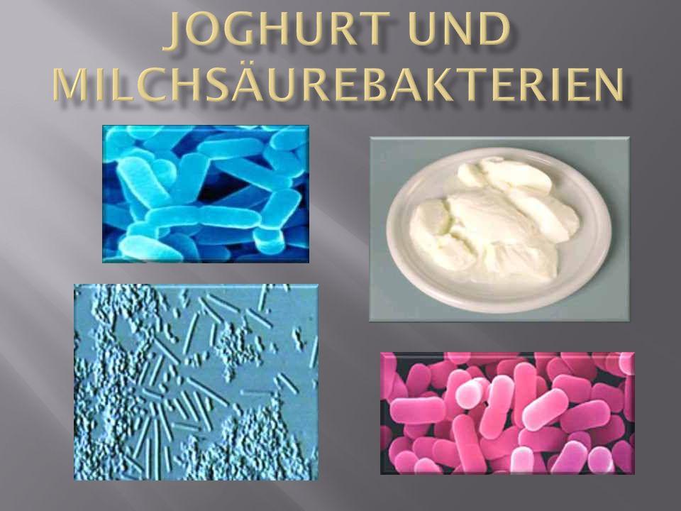 Joghurt und Milchsäurebakterien