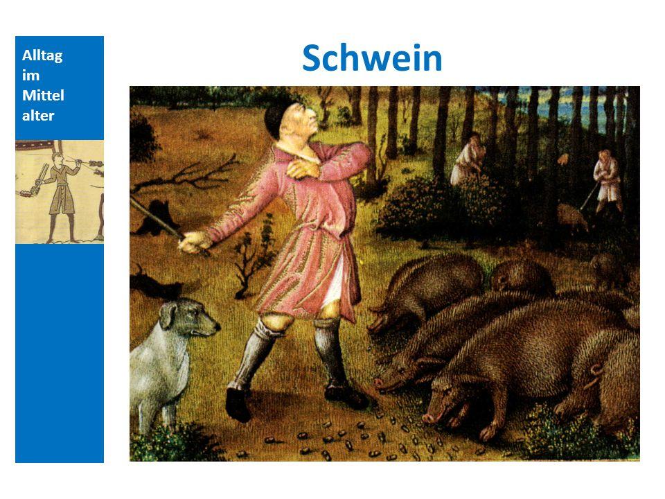 Quellen und Literatur Schwein Alltag im Mittelalter