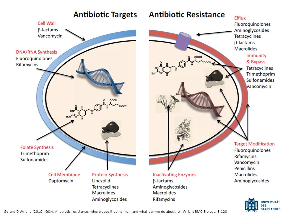 Gerard D Wright (2010), Q&A: Antibiotic resistance: where does it come from and what can we do about it , Wright BMC Biology.