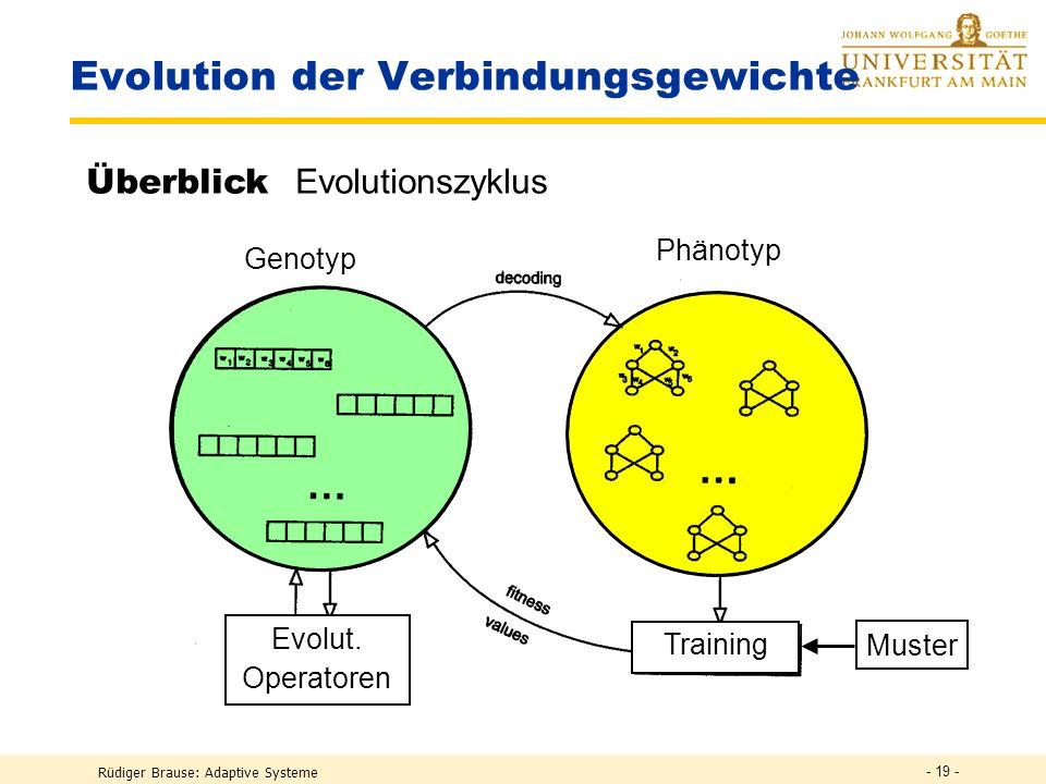 Evolution der Verbindungsgewichte