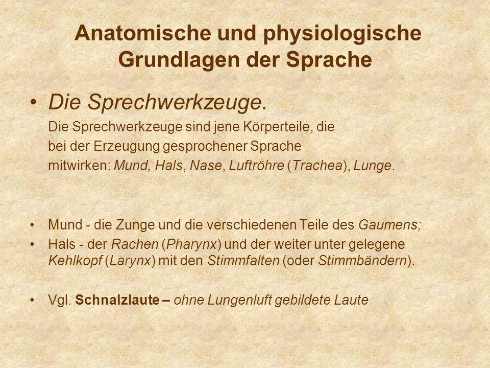Anatomische und physiologische Grundlagen der Sprache