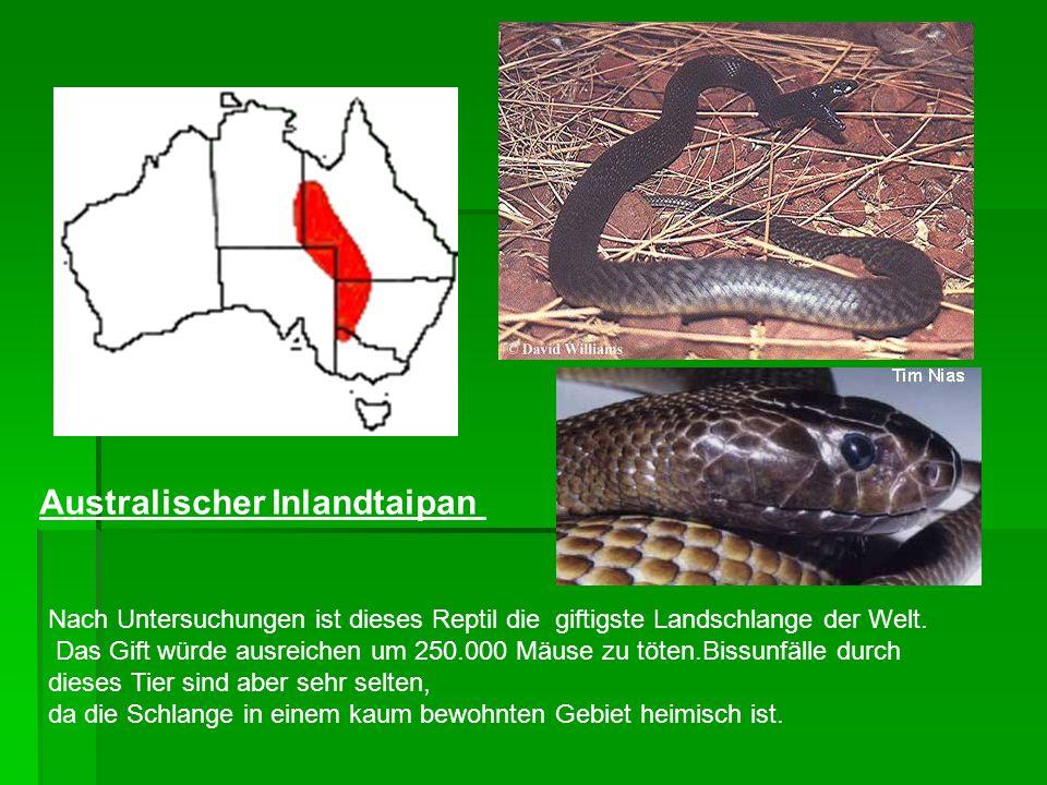 Australischer Inlandtaipan