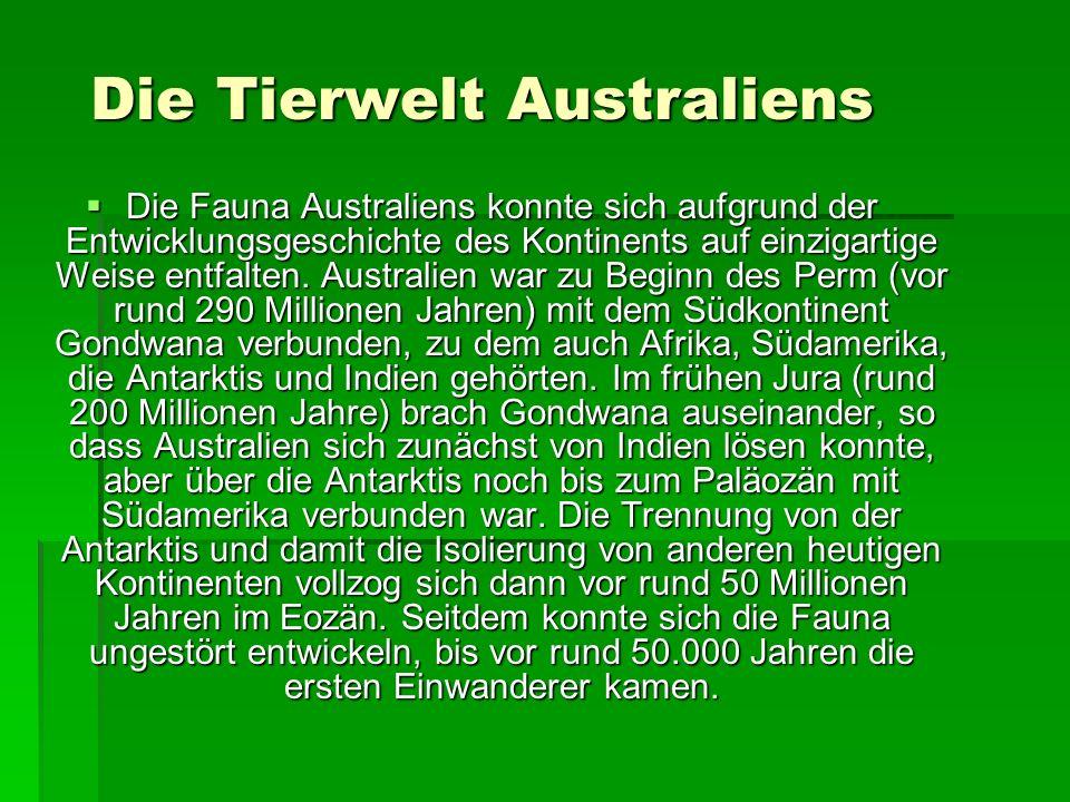 Die Tierwelt Australiens