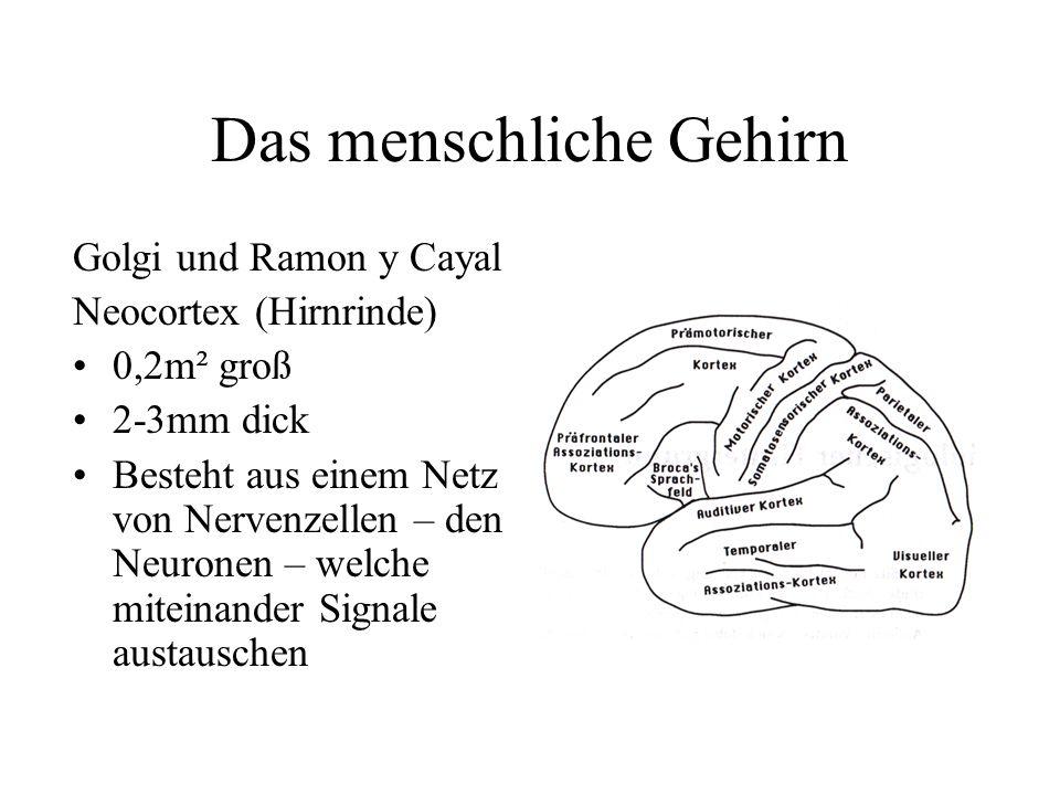 Großzügig Anatomie Der Hirnrinde Fotos - Anatomie Von Menschlichen ...