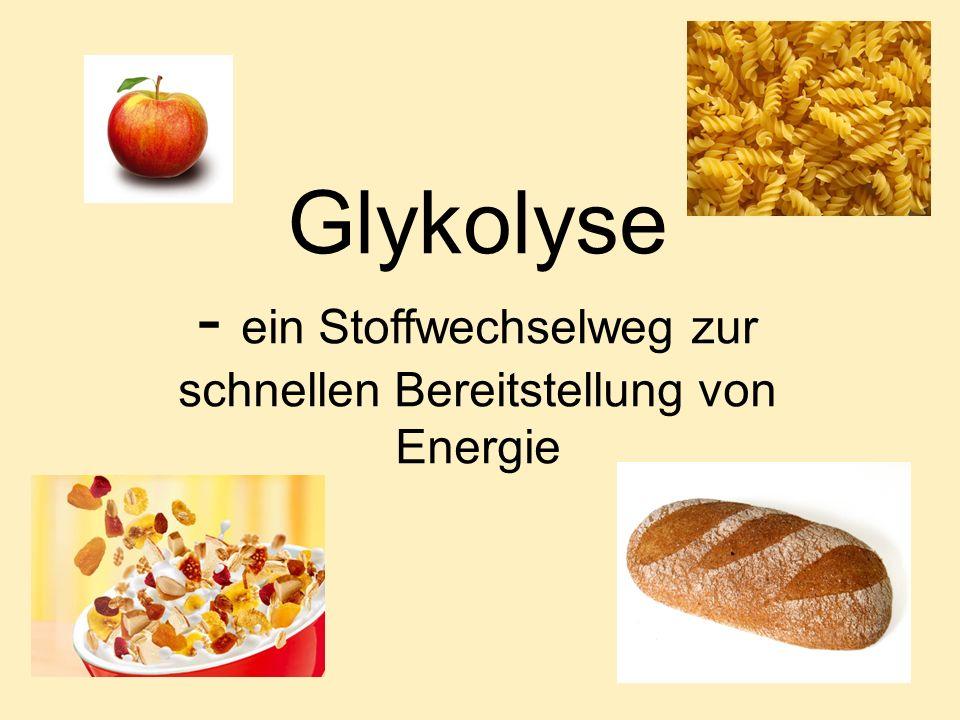 - ein Stoffwechselweg zur schnellen Bereitstellung von Energie