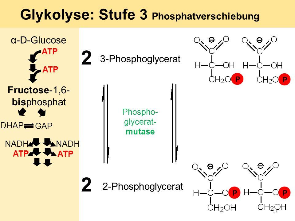 Glykolyse: Stufe 3 Phosphatverschiebung