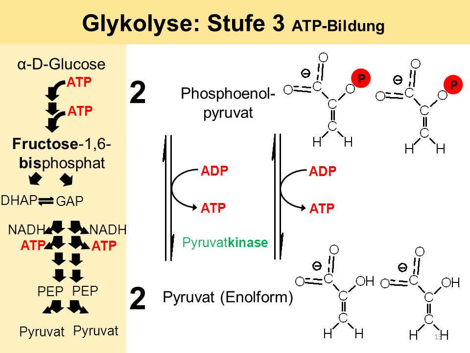 Glykolyse: Stufe 3 ATP-Bildung