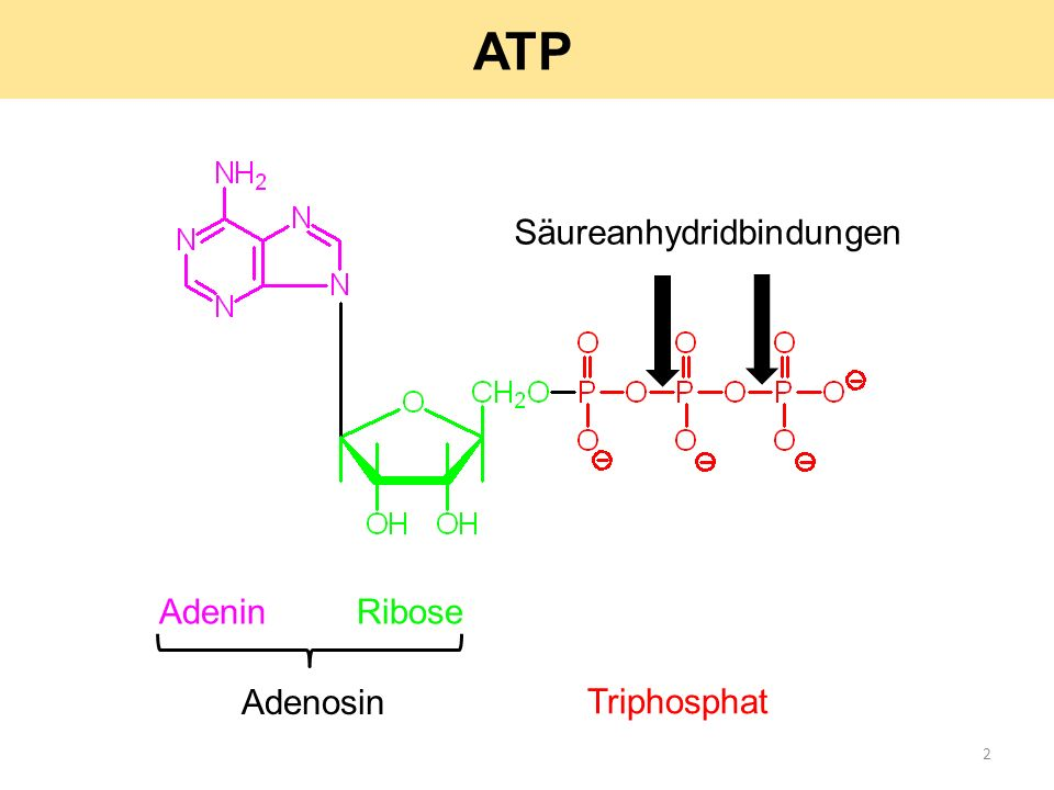 ATP Säureanhydridbindungen Adenin Ribose Adenosin Triphosphat