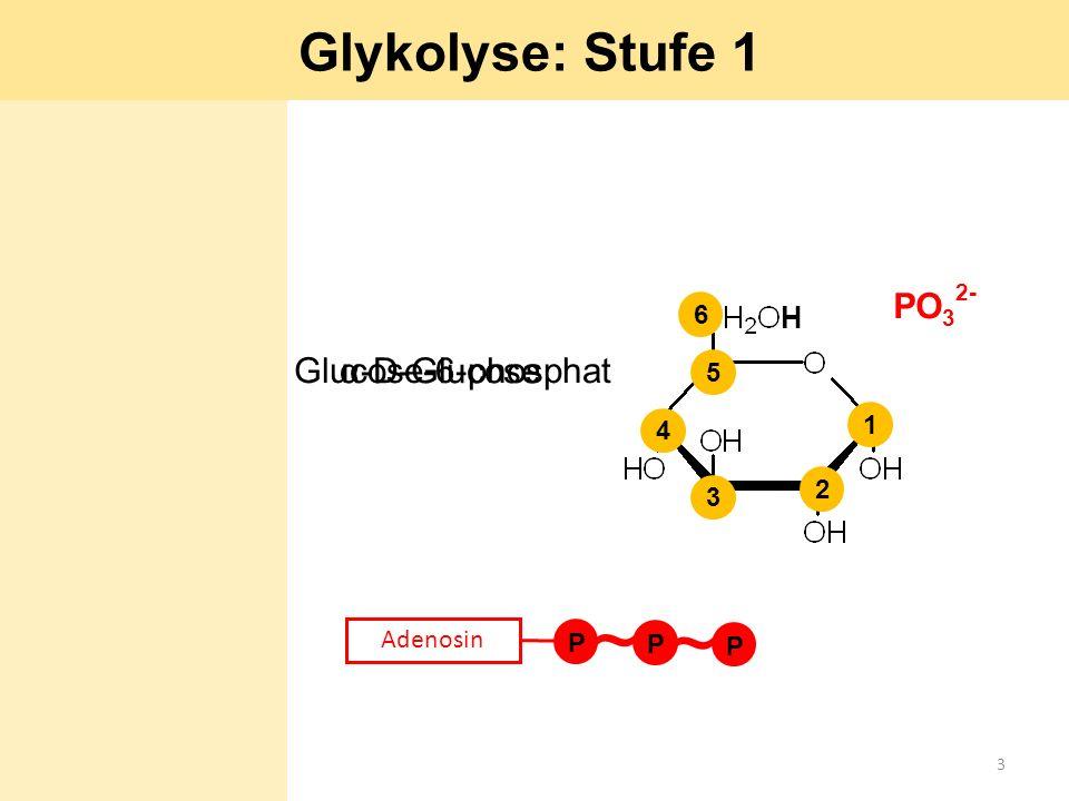~ ~ Glykolyse: Stufe 1 PO32- Glucose-6-phosphat α-D-Glucose H 6 5 1 4
