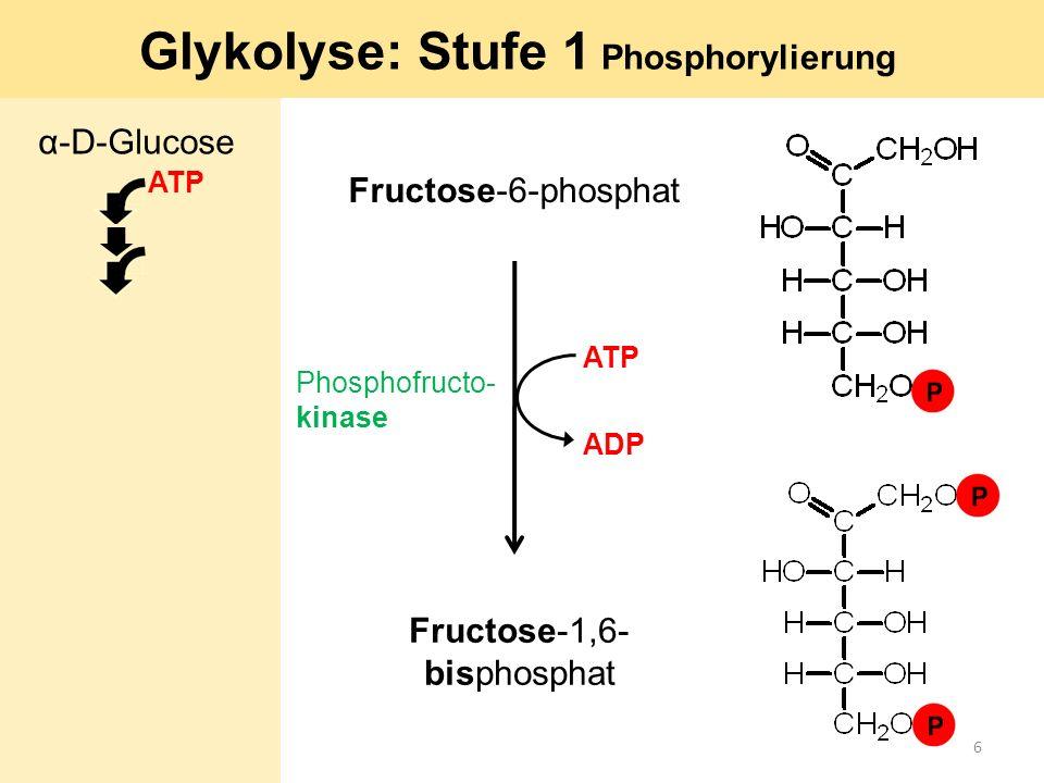 Glykolyse: Stufe 1 Phosphorylierung