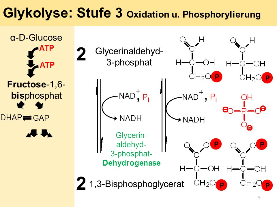 2 2 , Pi , Pi Glykolyse: Stufe 3 Oxidation u. Phosphorylierung