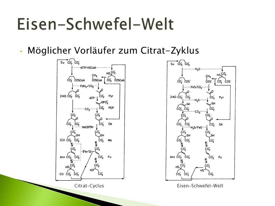 Eisen-Schwefel-Welt Möglicher Vorläufer zum Citrat-Zyklus