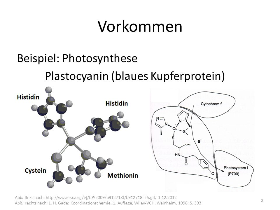 Vorkommen Beispiel: Photosynthese Plastocyanin (blaues Kupferprotein)