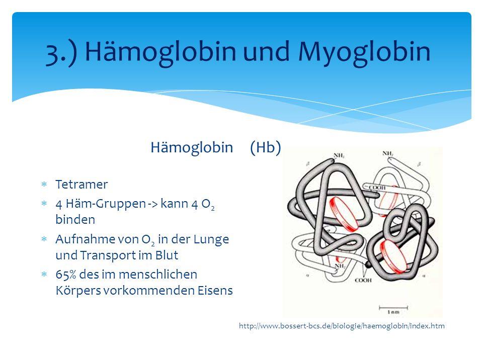 3.) Hämoglobin und Myoglobin
