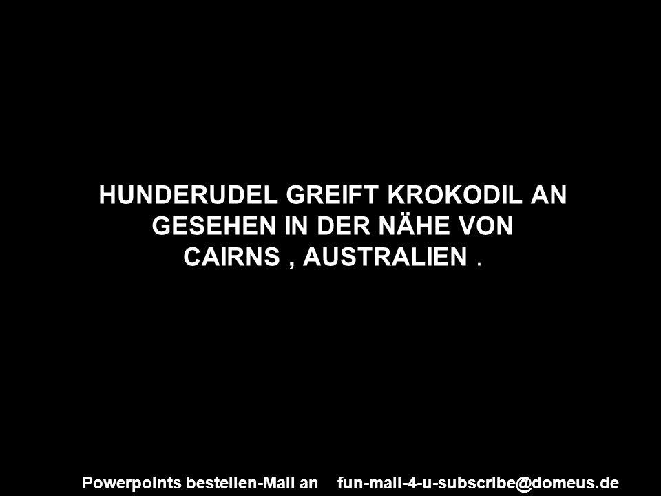 HUNDERUDEL GREIFT KROKODIL AN GESEHEN IN DER NÄHE VON CAIRNS , AUSTRALIEN .