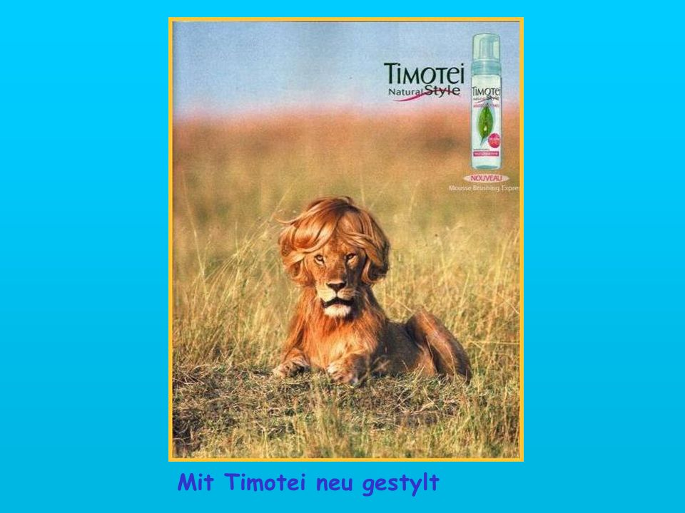 Mit Timotei neu gestylt