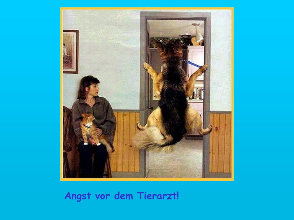 Angst vor dem Tierarzt!
