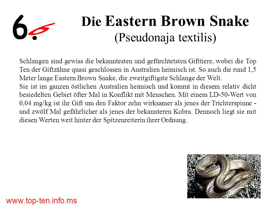 Die Eastern Brown Snake (Pseudonaja textilis)