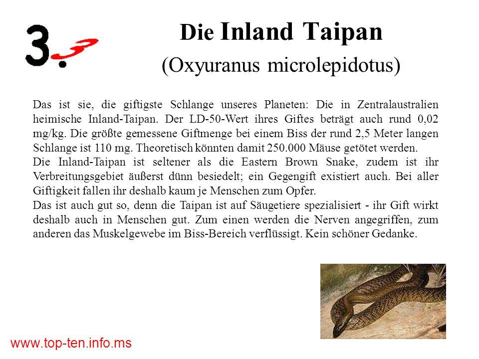 Die Inland Taipan (Oxyuranus microlepidotus)