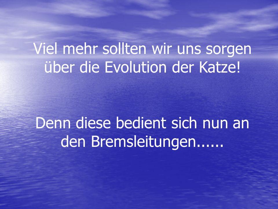 Viel mehr sollten wir uns sorgen über die Evolution der Katze!