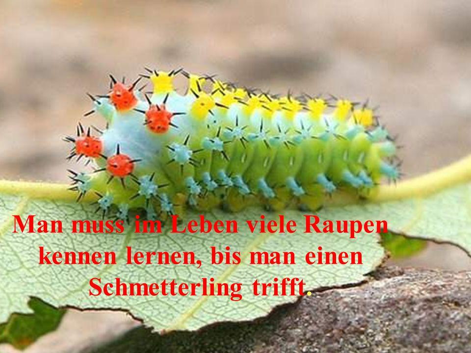 Man muss im Leben viele Raupen kennen lernen, bis man einen Schmetterling trifft.