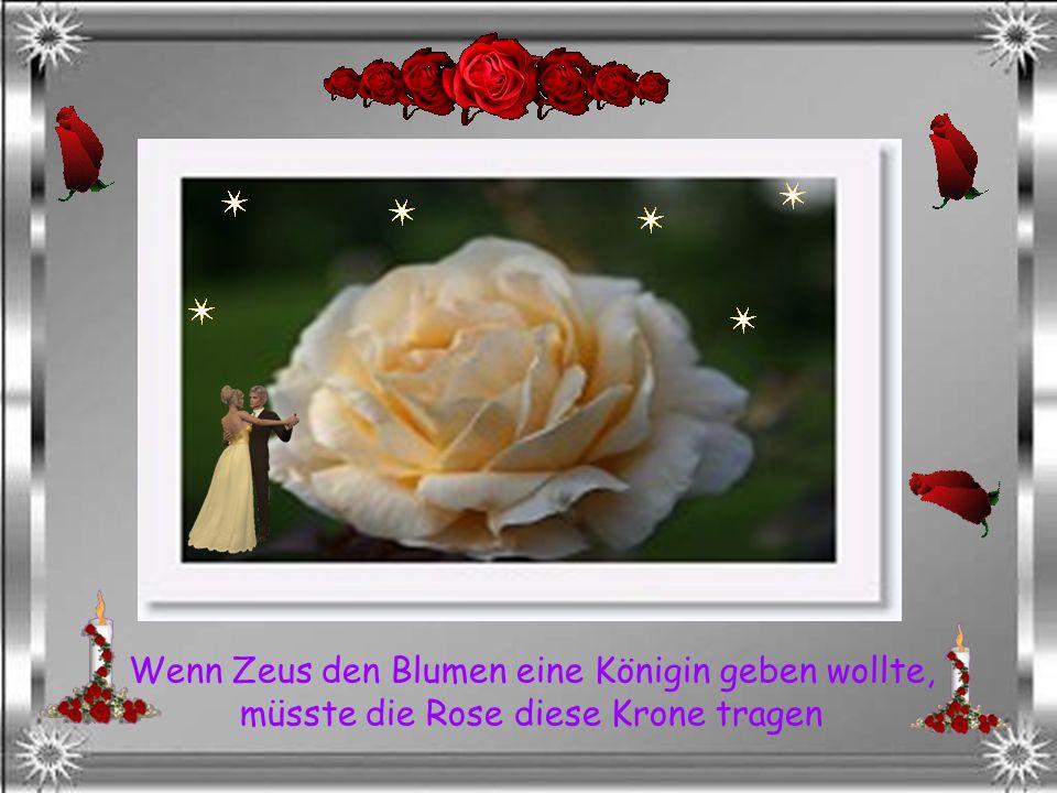 Wenn Zeus den Blumen eine Königin geben wollte, müsste die Rose diese Krone tragen